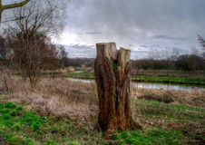 Tree trunk. Near a river early in the morning stock photography