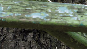 Tree trunk. A tree trunk with an old plank bench stock video footage