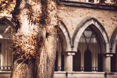 Tree trunk over old building. Stock Image