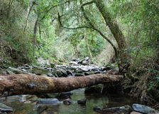 Tree trunk over stream in tropical forest Royalty Free Stock Photos