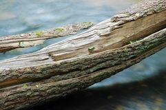 Tree trunk over water Stock Image
