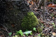 Tree trunk overgrown with moss Stock Image