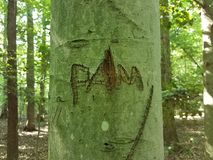 Tree trunk with pam carved on it. In the forest Stock Photography
