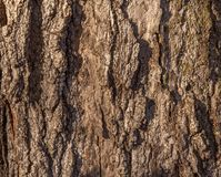 Tree trunk in the park. Stock Photography