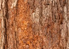 Tree trunk in the park.  Royalty Free Stock Image