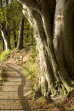 Tree Trunk and Path with Seat Stock Photo