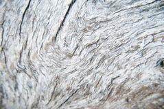 Tree trunk pattern Royalty Free Stock Image