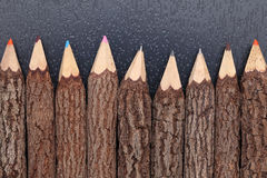 Tree trunk pencils Royalty Free Stock Images