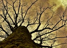 the tree and the clouds royalty free stock photos