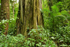 Tree trunk in rain forest Stock Photo