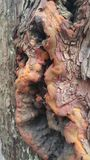 Tree trunk Stock Image