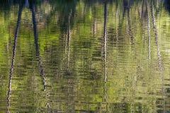 Tree trunk reflections, Mountain Fork River, Oklahoma Royalty Free Stock Photos