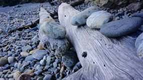 Tree trunk with rocks Stock Images