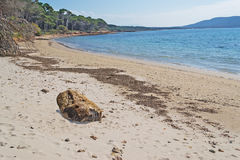 Tree trunk on the sand Stock Photography