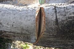 Tree trunk with saw cut Stock Photos