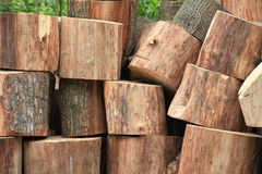 Tree trunk sawn into pieces  firewood Stock Image