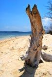 tree trunk at the seashore Royalty Free Stock Photo
