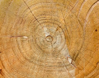 Tree Trunk Section Royalty Free Stock Photography