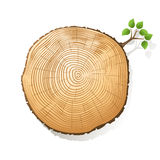 Tree trunk section Stock Images