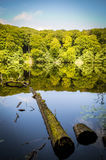 Tree trunk in a see and forrest reflection Stock Photos