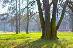 Tree trunk and shade on  sunny day. Tree trunk and shade on a sunny day Royalty Free Stock Image
