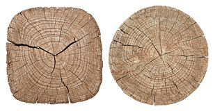 Tree trunk showing growth rings Stock Images