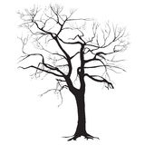 Tree trunk silhouette without leaves Stock Photo