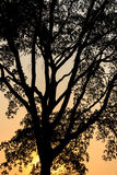 Tree trunk silhouette with sunset light Royalty Free Stock Image