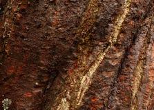 Tree trunk skin Stock Photos
