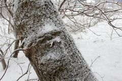 Tree trunk in snow in winter Royalty Free Stock Photography