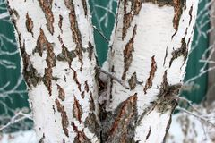 Tree trunk in snow in winter Stock Images