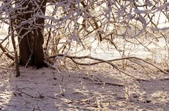Tree trunk in snowy park, winter nature background Royalty Free Stock Photography