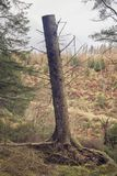 A tree trunk standing bare stock image