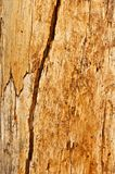 Tree Trunk Surface With Cracks Stock Image
