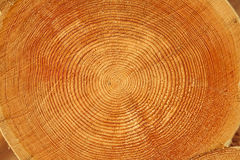 Tree Trunk Texture Royalty Free Stock Photography