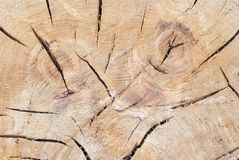Tree trunk texture Royalty Free Stock Image