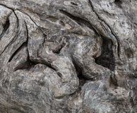 The tree trunk Stock Photos