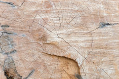 Tree trunk texture or background Stock Images