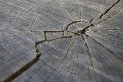 Tree Trunk Texture Stock Photography