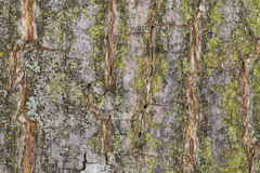 Tree trunk texture. Color image Royalty Free Stock Photos
