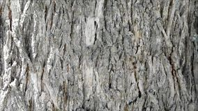 Tree trunk texture. In the garden stock footage