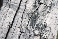 Tree trunk texture Stock Image