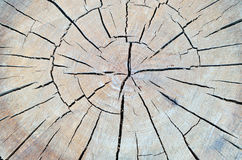 Tree trunk texture Royalty Free Stock Images