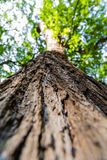 Tree / trunk texture with very shallow depth of field Royalty Free Stock Image