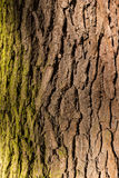 Tree / trunk texture with very shallow depth of field Stock Photography