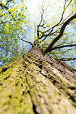 Tree / trunk texture with very shallow depth of field Stock Photos