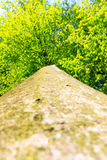 Tree / trunk texture with very shallow depth of field Royalty Free Stock Photos