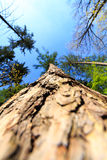 Tree / trunk texture with very shallow depth of field Royalty Free Stock Photography