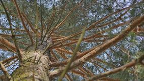 Tree / trunk texture with very shallow depth of field stock video
