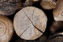 Tree trunk texture Stock Image